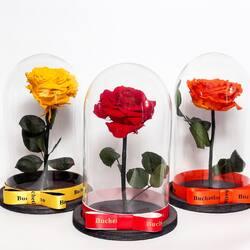 """🌹Trandafirul se numără printre cele mai cunoscute și dăruite flori de pe planetă și de multe ori este asociat cu un simbol al iubirii. Filmul de animație """"Frumoasa și bestia"""" în care Belle primește un trandafir nemuritor într-o cupolă a servit drept inspirație pentru procesul de criogenare a trandafirilor.     Dar ce este criogenarea? Trecerea trandafirilor printr-un proces destul de complicat, denumit liofilizare, ce constă în utilizarea unei aparaturi speciale care funcționează pe bază de vid, unde mai întâi trandafirii se îngheață la temperaturi între -30 și -55 de grade timp de 24 de ore. După aceea, acest aparat extrage umiditatea din flori, trandafirul este plasat sub vid, urmând ca temperatura să fie crescută treptat, zi de zi, timp de aproximativ 3-4 săptămâni. Petalele sunt conservate individual iar trandafirii sunt reconstruiți manual la final. Ca rezultat, aceștia își păstrează forma și culoarea celor naturali și pot rezista de la 3 la 25 de ani.  📸 by : @nicolae.neagu.ph"""