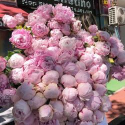Queen of luxury flowers, peonies, girls' favorites🌸🤍  Order🌐: www.buchetino.ro Call ☎️: 0720701701 Shop🏠: B-dul Mircea Voda 34, Bucuresti Shop🏠: B-dul Mamaia 62; Constanta  #livramflori #giftideas #luxuryflowersboxes #deliveryflowers #heartroses #boquete #luxurygifts #luxuryflorist #tulips #naturalflowers #buchetino #luxuryflowersboutique #boutiquegiftshop #buchetinodesign #boutiquegiftshop #cadouridelux #cutiicuflori #florideprimavara #queenofluxuryflowers #poenies